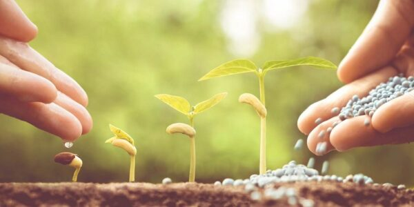 Abonado del suelo en fruticultura