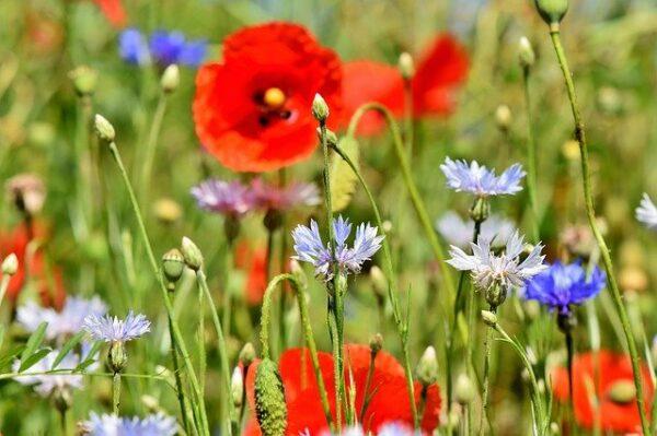 Acondicionamiento y conservación de plantas verdes y con flor