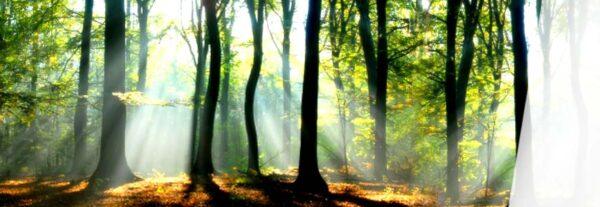 Control de documentos y registros del Sistema de Gestión Ambiental en la organización