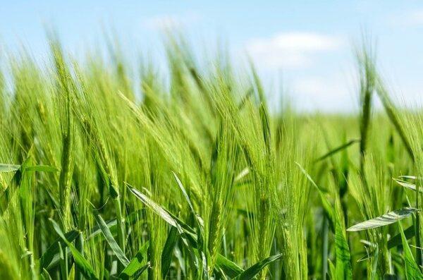 Operaciones Auxiliares de Preparación del Terreno, Plantación y Siembra de Cultivos Agrícolas