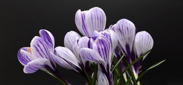 Acondicionamiento de Instalaciones en Horticultura y Floricultura