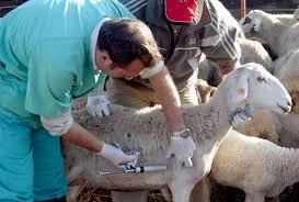 Operaciones Básicas de Control Sanitario de Animales