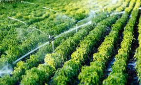 Acondicionamiento del terreno o medio de cultivo en actividades agricolas