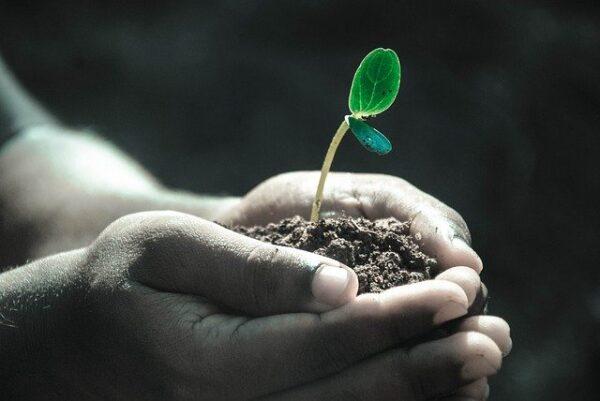 Determinación del Estado Sanitario de las Plantas, Suelo e Instalaciones y Elección de los Métodos de Control